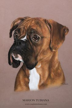 Behind The Scenes By arts_promote Animal Drawings, Art Drawings, Dog Artwork, Boxer Dogs, Boxers, Watercolor Canvas, Color Pencil Art, Art Challenge, Dog Portraits