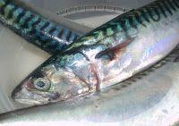 Caballa en escabeche Fish, Meat, Gastronomia, Gourmet, Fish Recipes, Cooking Recipes, Vinegar, Rice, Cod