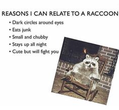 I'm a raccoon