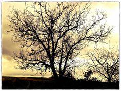 Walnuttreee and vineyards Vineyard, Celestial, Sunset, Outdoor, Nice Asses, Outdoors, Vine Yard, Vineyard Vines, Sunsets