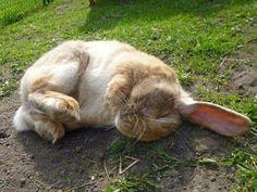 Tired little bun