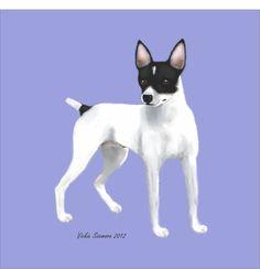 BiColor Mini Rat Terrier Digital Art Print by VickieSizemore, $20.00