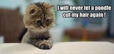 Who Would Ever Trust a Dog With Scissors? - LOLcats is the best place to find and submit funny cat memes and other silly cat materials to share with the world. We find the funny cats that make you LOL so that you don't have to. Funny Cute Cats, Silly Cats, Funny Cat Memes, Crazy Cats, Funny Bunnies, Animals And Pets, Funny Animals, Cute Animals, Baby Kittens