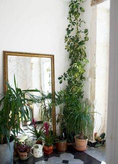 zimmerpflanzen flur gestalten einrichtungsideen