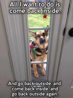 Wicked Training Your German Shepherd Dog Ideas. Mind Blowing Training Your German Shepherd Dog Ideas. Funny Dog Memes, Funny Animal Memes, Funny Animal Pictures, Cute Funny Animals, Cute Baby Animals, Dog Pictures, Funny Dogs, Dog Humor, Animal Funnies