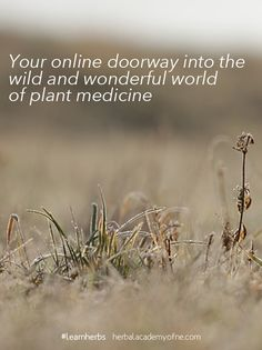 If you want to learn more about herbs as medicine and as food, and if you're just too busy to enroll in an in-person program, join us for a comprehensive and convenient online herbal course you can complete anywhere and anytime—right on your laptop! Learn what your great ancestors knew about the natural world and begin to build your own Materia medica and apothecary. We'll show you how and tell you why. #learnherbs #herbalism #inspiration