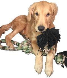 SatisPet 24Inch Knotted Woven Rope Tug Chew Toy for Large Dogs Camouflage *** For more information, visit image link. (This is an affiliate link) #DogToys