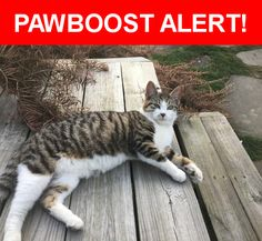 Please spread the word! Stripy was last seen in East Palestine, OH 44413.    Nearest Address: Near Taggart St & East St
