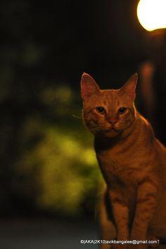 Meow! I am Garfield (by aninda kabir [avik])