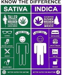 The difference between sativa and indica