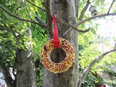 I have seen pictures of many different hanging bird seed feeders. I love watching the birds in our yard and kept saying. Bird Seed Feeders, Bird House Feeder, Fete Ideas, Diy Ideas, Craft Activities, Bird Houses, Pet Birds, Garden Plants, Gardening Tips