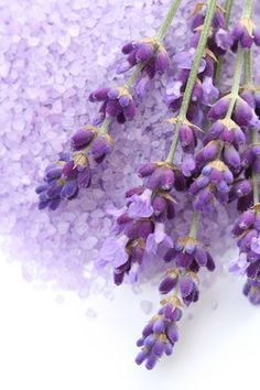 Great Collection of Lavender Recipes. This article shows the many ways to use lavender. http://www.glenbrookfarm.com/collection-of-lavender-recipes.html