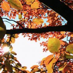 Hello autumn! MaidofGlass.co.uk blog post 15.09.16 #colourtrends #autumn #turningleaf #lampworkjewellery