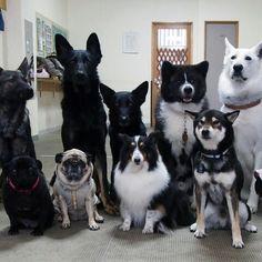 ペットスマイルは、ペットオーナーや動物好きな人のためのSNSを中心としたサービス(無料)です。モフモフしたい人集まれ!
