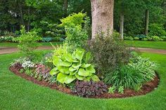 garten dekoration Building a flower beds around a tree can add a beautiful and neat appearance to your landscaping. This process is relatively simple and is well worth. Outdoor Gardens, Shade Plants, Front Yard Landscaping, Shade Garden, Landscaping Around Trees, Lawn And Garden, Landscape Trees, Hosta Plants, Plants