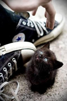 Black kitten, blue eyes, sneakers, hand, cute, nuttet, adorable, curious, pet, photo.