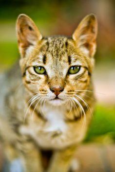 Small Cat by Louay Hosny, via 500px