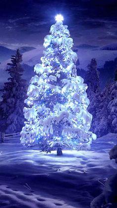An outdoor Christmas tree Christmas Scenery, Beautiful Christmas Trees, Winter Scenery, Christmas Background, Blue Christmas, Outdoor Christmas, Winter Christmas, Merry Christmas, Christmas Branches