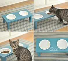 would love for my cat - she would refuse to eat from it :)