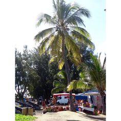 #974#iledelareunion#reunionisland#gotoreunion#team974#creole#market#fruit#food##974island#indianocean#travel#instamoods#instagram#happy#like4like#likeforlike#loveit#instadaily#instalike#instagood#world#worldmarket#orange#reunion#paradise#saintpaul#pitaya# by stephvln