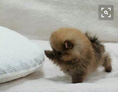 Its So Cute !!!!!