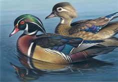 Wood Duck - George Lockwood