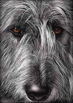 Wolfhound by Elena Kolotusha Scratchboard/Ink. LOVE that this is on scratchboard! Pet Dogs, Dogs And Puppies, Dog Cat, Doggies, Irish Wolfhound Dogs, Scratchboard Art, Wow Art, Dog Paintings, Dog Portraits