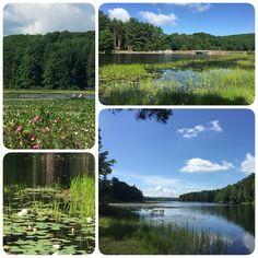 Black Moshannon Lake In July State Park Pennsylvania