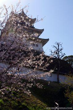 Kakegawa Castle (Shizuoka) in spring: http://zoomingjapan.com/travel/kakegawa-castle/
