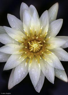 The center of the universe    ©2012 alan shapiro