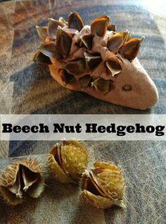 Autumn kids craft beech nut hedgehog