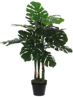 SILKKIKASVI PEIKONLEHTI 100CM RUUKUSSA Plant Leaves, Plants, Flora, Plant, Planting