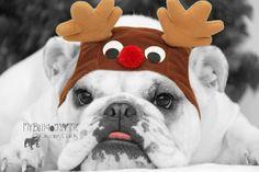 English Bulldog Christmas Card Card 28 / by BulldogGreetingCards, $3.00