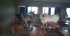 """A Facebook user Adzua Mc Grave who posted the photos didn't indicate the part of Benue State or name of the school. He wrote:  """"Now that these cows have sent out school children and taken over their classes I think they want to learn sense. May be it's a class to tutor them about the anti open grazing bill"""" - More photos after the cut...  http://ift.tt/2r6kLM6 latest news in benue news"""