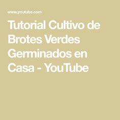 Tutorial Cultivo de Brotes Verdes Germinados en Casa - YouTube