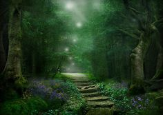 The enchanted path...