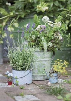 Flowers in old watering cans & lavender in a tin pail...fun idea!