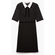Dress with Peter Pan collar and lace insets ❤ liked on Polyvore featuring dresses, lace detail dress, peter pan dress, peter pan collar dresses, lace panel dress and lace inset dress