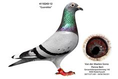4015439-13 • Van der Maelen - Penne