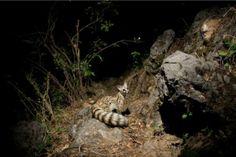 Las mejores fotos de animales salvajes tomadas por cámaras trampa – Ciencias animales – Noticias, última hora, vídeos y fotos de Ciencias animales en lainformacion.com