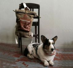 love the bag. and the dog :)