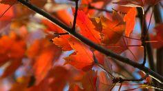I love autumn, and my camera.