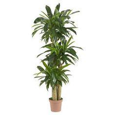 Silk Dracaena Plant