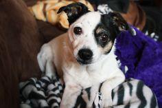 my puppy Murphy! #puppy #cutedog
