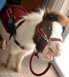 Illinois set to allow miniature HORSES as service animals in landslide vote
