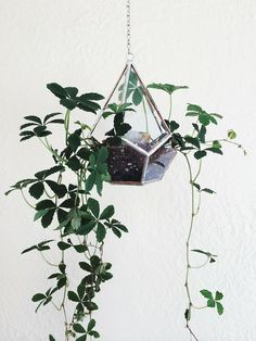 Love this terrarium and the green spilling over.