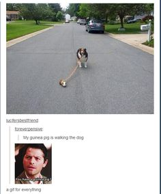 """You have a guinea pig?"" 