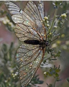 Is This an 'Endangered Starry Butterfly'? Aesthetic Photo, Aesthetic Pictures, Fae Aesthetic, Glitter Photography, Fashion Photography, Photography Accessories, Nature Photography, Pink Lila, Beautiful Butterflies