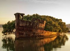 Floating Mangrove Forest Springs Up in a Wrecked Coal Ship | Inhabitat - Sustainable Design Innovation, Eco Architecture, Green Building