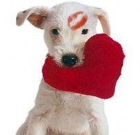 Buon San Valentino da www.dogsandpeople.it